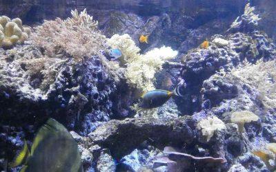 Civic Aquarium of Milan